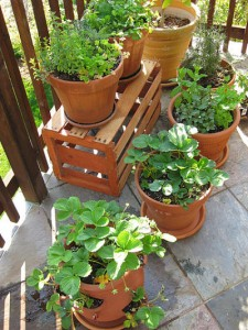container_garden_on_patio3_opt