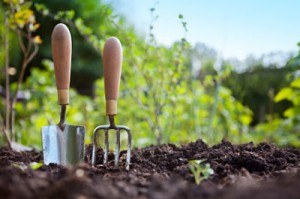 bn-spring_vegetable_garden_guide_when_to_plant_opt